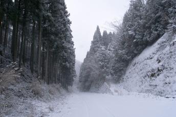 2012冬_月うさぎ_2.jpg