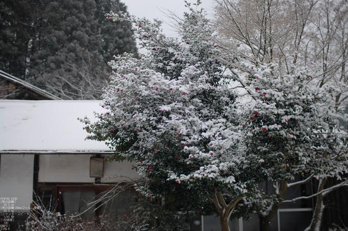 2012冬_月うさぎ_6.jpg