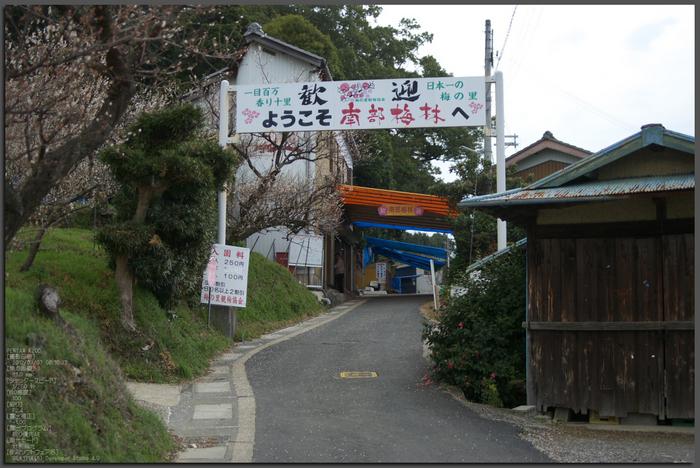 南部梅林2012_八百富写真機店お写ん歩_top1.jpg