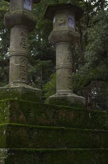 奈良公園・梅_2012_yaotomi_12.jpg
