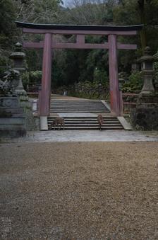 奈良公園・梅_2012_yaotomi_15.jpg