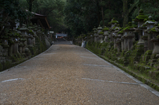奈良公園・梅_2012_yaotomi_18.jpg