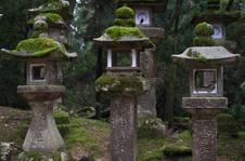 奈良公園・梅_2012_yaotomi_19.jpg