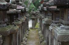 奈良公園・梅_2012_yaotomi_21.jpg
