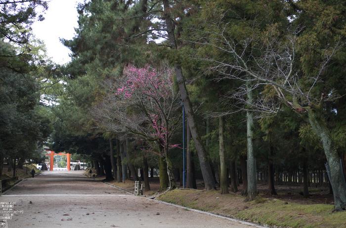 奈良公園・梅_2012_yaotomi_28.jpg