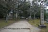 奈良公園・梅_2012_yaotomi_6.jpg