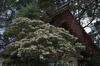 奈良公園・梅_2012_yaotomi_7.jpg