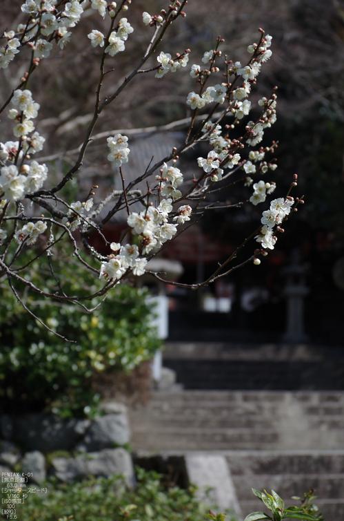 観心寺・梅_2012_yaotomi_5.jpg