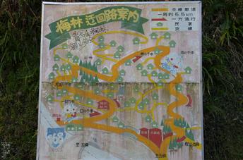 賀名生梅林_2012_yaotomi_22.jpg