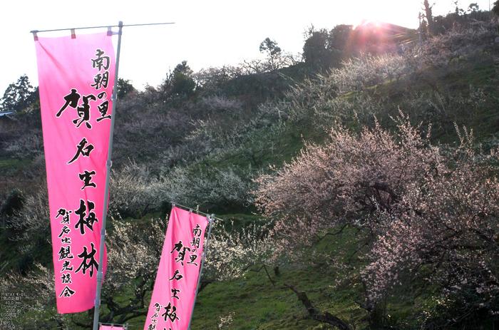 賀名生梅林_2012_yaotomi_7.jpg