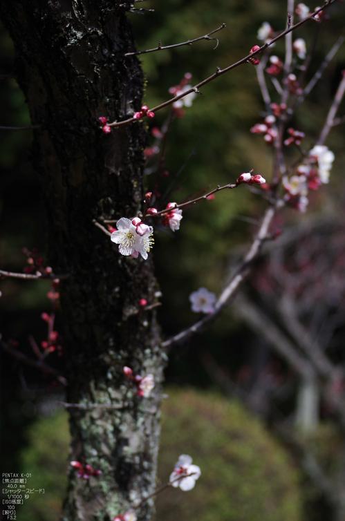 2012_随心院・梅_K-01_yaotomi_6.jpg