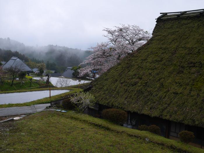 三多気_桜_2012_GF5_yaotomi_11.jpg