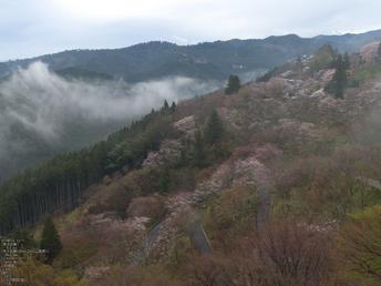 吉野山_桜_その1_2012_yaotomi_3.jpg