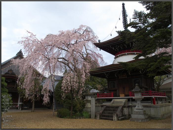 吉野山_桜_その1_2012_yaotomi_top2.jpg