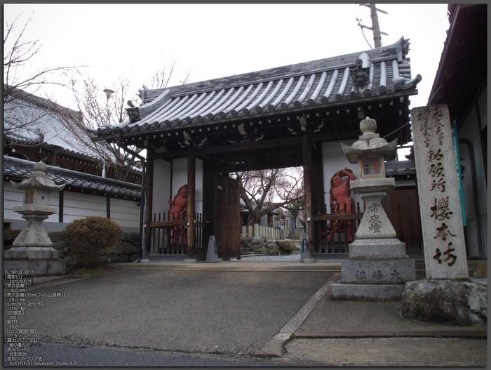 吉野山_桜_その1_2012_yaotomi_top5.jpg