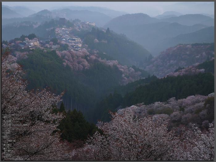 吉野山_桜_2012年_八百富_top1.jpg