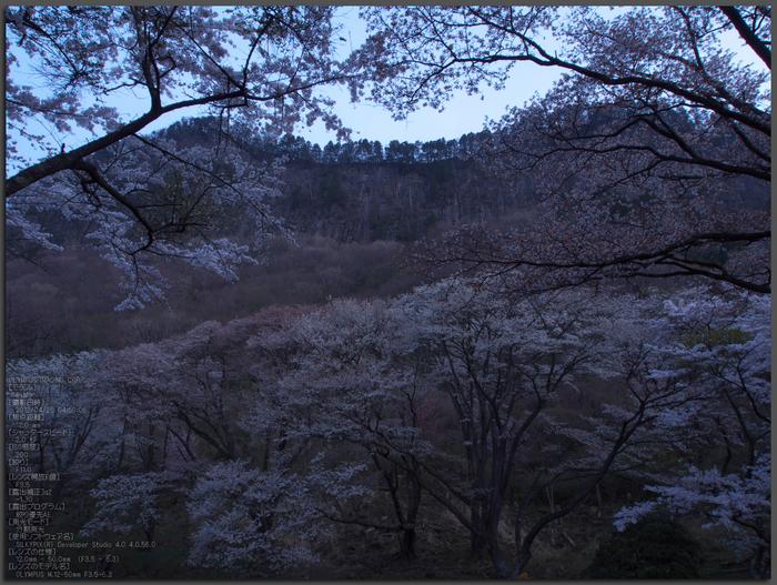 屏風岩公苑_桜_OM-D_yaotomi_top1.jpg