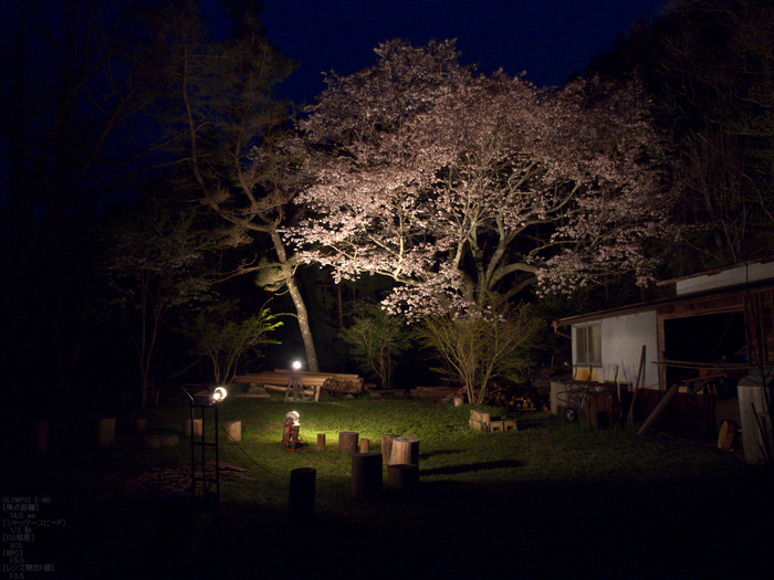 月桜_2012_OLYMPUS_E-M5_8.jpg