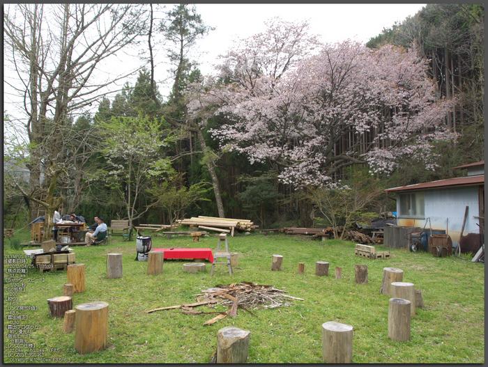 月桜_2012_OLYMPUS_E-M5_top1.jpg