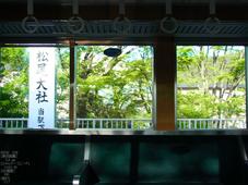 松尾大社_やまぶき_2012_CX6_yaotomi_2.jpg