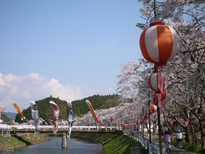 菟田野_桜こいのぼり_2012_GF5_yaotomi_3.jpg
