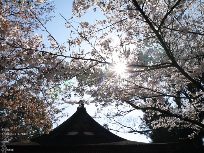談山神社_桜_2012_GF5_yaotomi_10.jpg