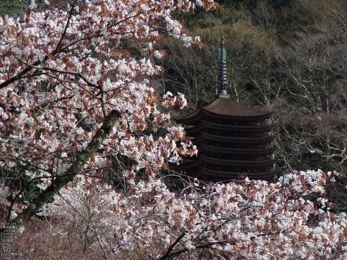談山神社_桜_2012_GF5_yaotomi_11.jpg