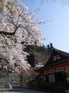 談山神社_桜_2012_GF5_yaotomi_2.jpg