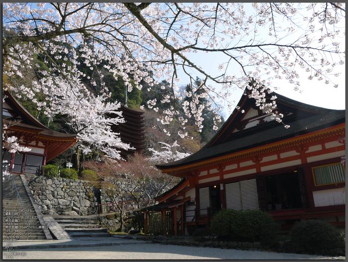 談山神社_桜_2012_GF5_yaotomi_top1.jpg
