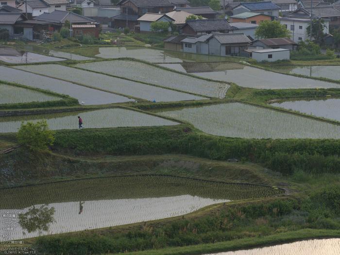 M.ZUIKO_DIGITAL_ED_75mm_F1.8_栗原・棚田_yaotomi_3.jpg