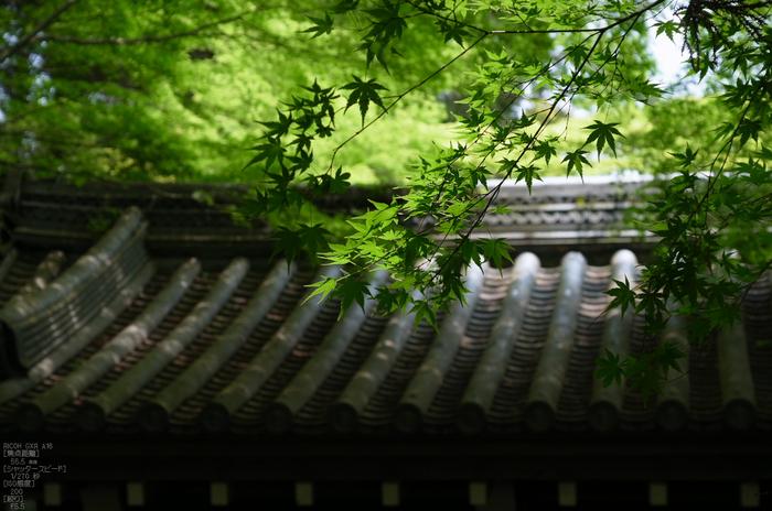 RICOH_GXR_A16_光明寺・新緑_2012_yaotomi_15.jpg