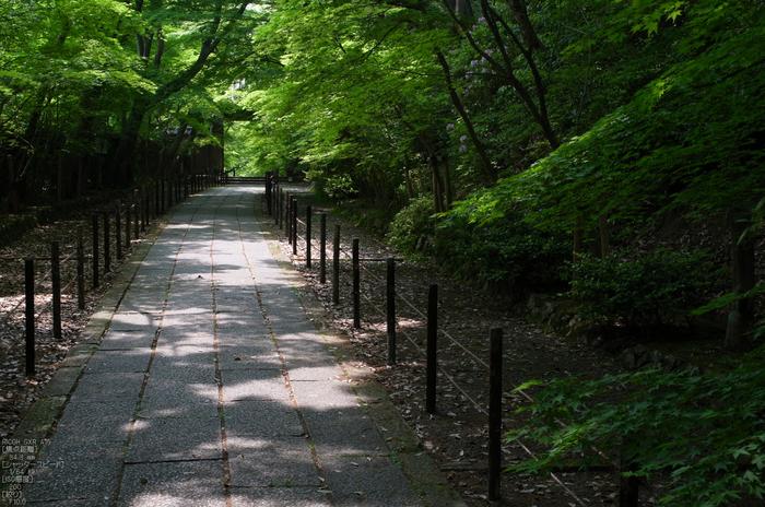 RICOH_GXR_A16_光明寺・新緑_2012_yaotomi_18.jpg