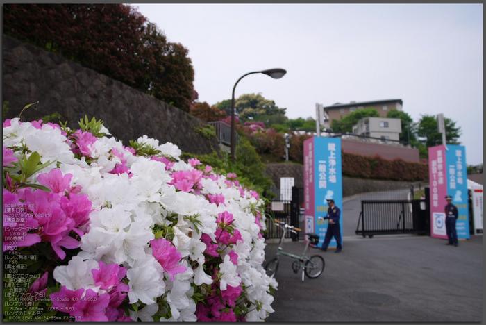 RICOH_GXR_A16_蹴上浄水場・ツツジ_2012_yaotomi_top1.jpg