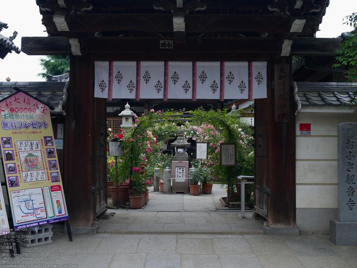 おふさ観音・薔薇_ノクトン_yaotomi_osyanpo_top1.jpg
