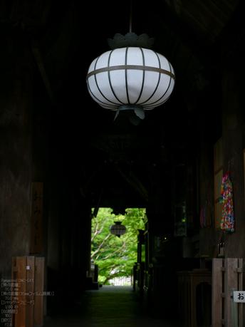 長谷寺紫陽花2012_LUMIX_12-35mm_yaotomi_11.jpg