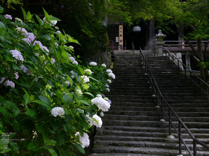 長谷寺紫陽花2012_LUMIX_12-35mm_yaotomi_20.jpg