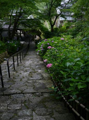 長谷寺紫陽花2012_LUMIX_12-35mm_yaotomi_23.jpg