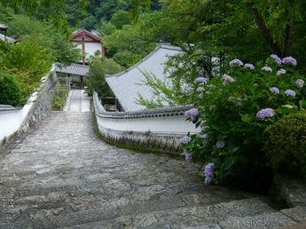 長谷寺紫陽花2012_LUMIX_12-35mm_yaotomi_25.jpg