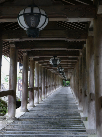 長谷寺紫陽花2012_LUMIX_12-35mm_yaotomi_3.jpg
