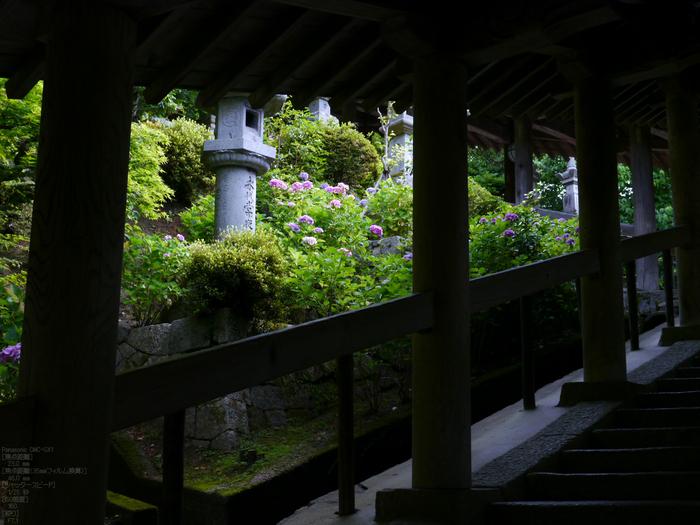 長谷寺紫陽花2012_LUMIX_12-35mm_yaotomi_8.jpg