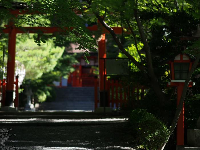 大原野神社_睡蓮_2012_yaotomi_お写ん歩_13.jpg
