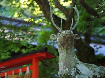 大原野神社_睡蓮_2012_yaotomi_お写ん歩_17.jpg