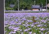 花の写真に蝶.jpg