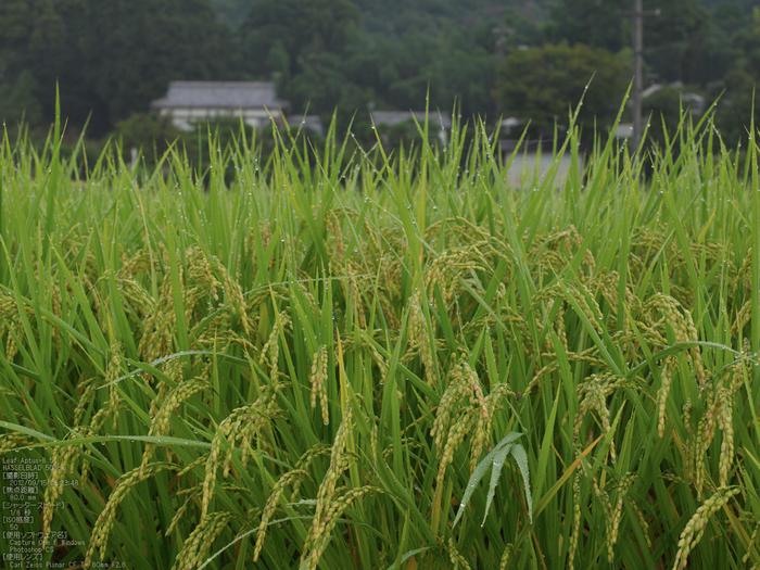 広沢池_2012_leaf_yaotomi_お写ん歩_6.jpg