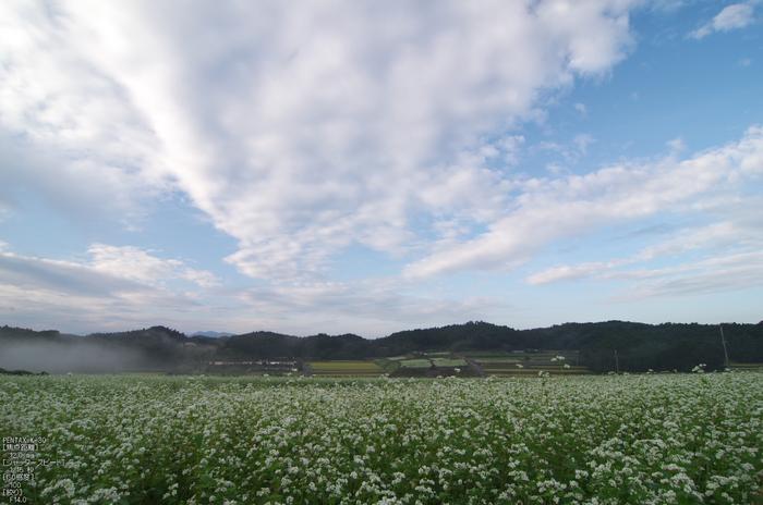 桜井_笠_蕎麦の花_PENTAX K-30_yaotomi_お写ん歩_7.jpg