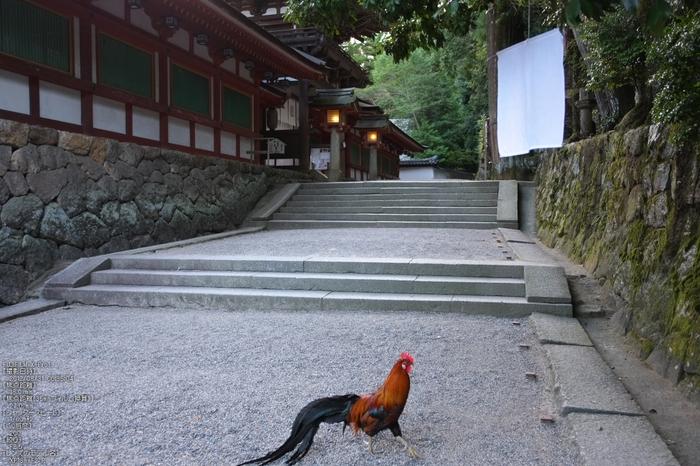 石上神社_2012_yaotomi_お写ん歩_3.jpg