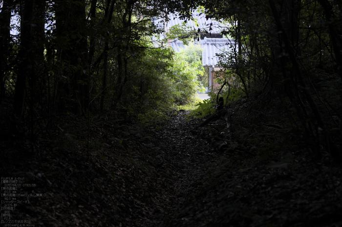 石上神社_2012_yaotomi_お写ん歩_6.jpg