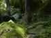 桑の木の滝_Phase-One-P30+_yaotomiお写ん歩_10.jpg