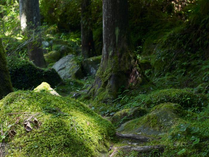 桑の木の滝_Phase-One-P30+_yaotomiお写ん歩_10s.jpg