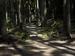桑の木の滝_Phase-One-P30+_yaotomiお写ん歩_12.jpg